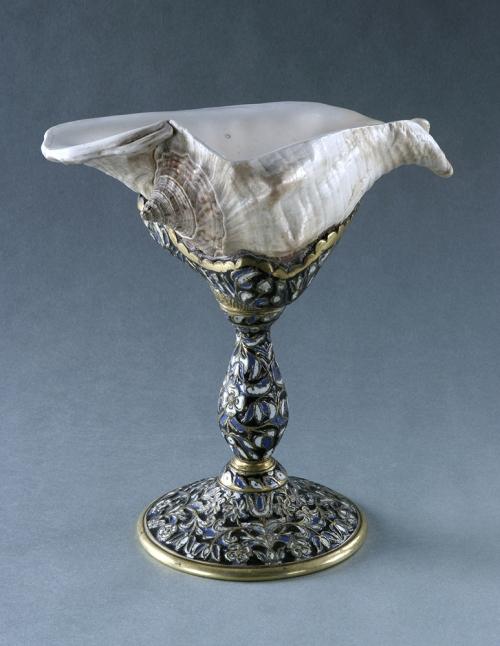 Strombus Shell cup Norwich Castle Museum sm